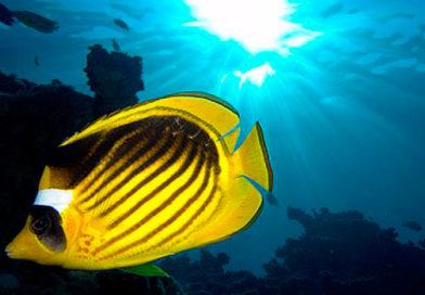 Мудра риба та вода