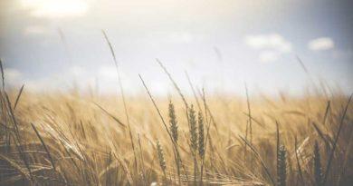 Проповідь на 21 неділю по Зісланні Святого Духа